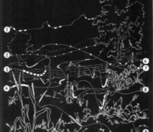 Der zauberhafte Tanz der Glühwürmchen